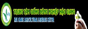 khach hang cua www.kenhchothuexe.com-giong hau giang
